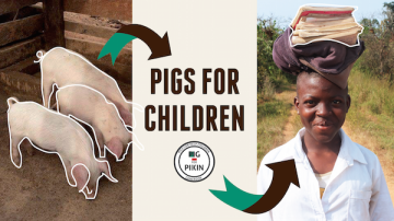 pigs_banner-NEW-01-crop.png